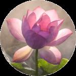 single_lotus-round-web