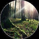 tree_root_thumbnail-circular-web